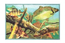 Delphin szőnyeg AQUA