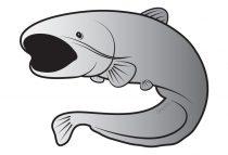 Delphin öntapadó harcsa SILVER