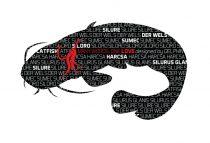 Delphin öntapadó HARCSA Words sorozat